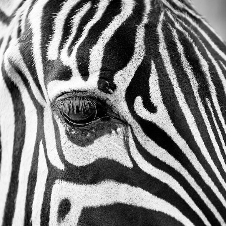 Zebra & Partners